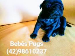 Pugs Black / Preto