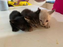 Doação filhotes Gato