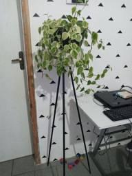 Suporte estilo industrial para planta ja com planta