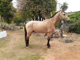 Cavalo 9 anos