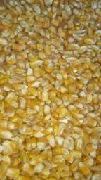 Milho Padrão Saca de 60kg.