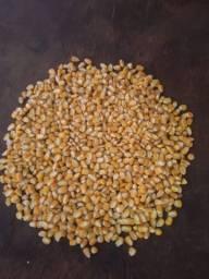 8 mil sacas de milho padrão