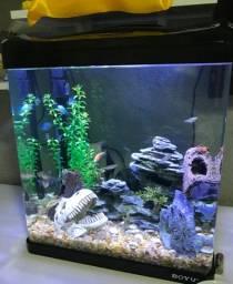 Aquario Boyu 25 litros