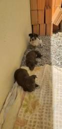 Doa cachorrinhos 3 fêmeas e 1 macho