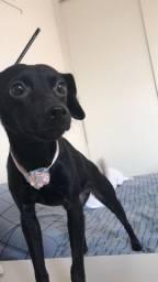 Cachorro Femea 9 meses vacinada para ADOÇAO