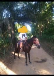 Cavalo bom para criança
