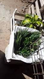 Vendo plantas e mudas