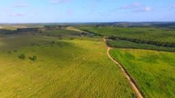 Fazenda de 297 ha em Estância/SE altamente produtiva (mogno/eucalipto/gado/banana/ovelha