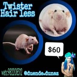 Twister hair less somemte