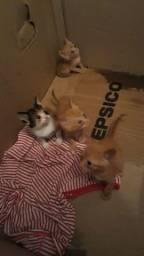 Doando filhotinhos de gato 3 macho 2 fêmea