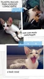 Filhote de gato macho para adoção