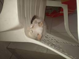Doando gatinha fêmea