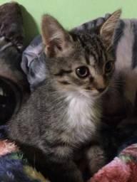Doação linda gatinha