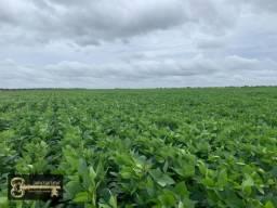 Fazevda Araguacema TO 285 Alqueirão ( 1379 ha) Plantando Tudo só tira a reserva.
