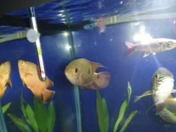 Temporalis - aquário
