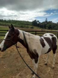 Égua pent horse lindaaa??