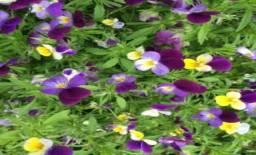 Sacolinha de flores comestíveis