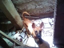 Doação de duas cadelas mãe e filha.