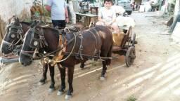 Parelha de poney 15mil