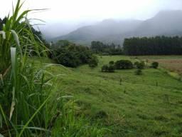 Velleda oferece fazenda 78 hectares, sendo 30 ha com eucaliptos + de 13 anos