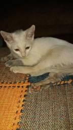 Doa-se gato gatinha em Brasília