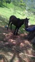 Vendo esse cavalo