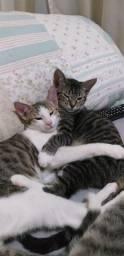 Gatinho e Gatinha para adoção responsável