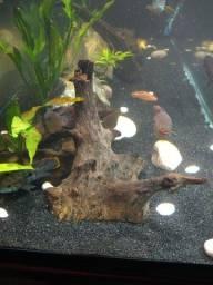 Tronco aquário tratado