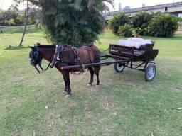 Vendo pônei, carroça ou charrete