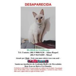 DESAPARECIMENTO: Ajude-nos a encontrar a Miah. Gratificação de R$300