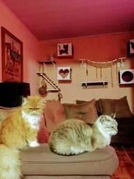 Nicho para Gatos Completo - 9 peças