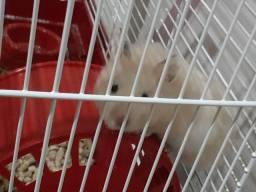 Xx DOAÇÂO DE Hamster Sirio + gaiola e acessórios xX