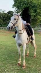 Cavalo Mangalarga Marchador pronto