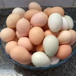 Vendo ovos caipira 15 reais o pente.