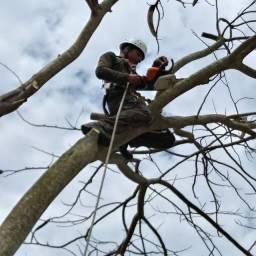 Corte e Poda de árvore