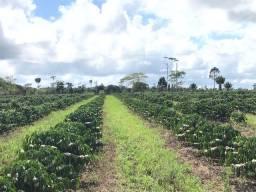 Fazenda próximo a Itabela
