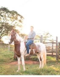 Cavalo Paulista registrado