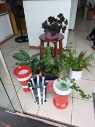 Vendemos plantas