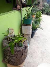 Plantas Bem Baratinho