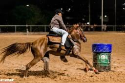 Cavalos Manaus AM