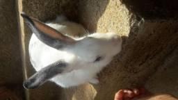 Vendo coelha fêmea