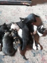 Precisando de um lar... faço doação desses lindos gatinhos