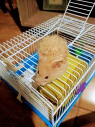 Vende-se filhotes de hamsters