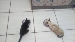 Doaçao de dois gatinhos machos.ja comem raçao.resgatei do meio da rua