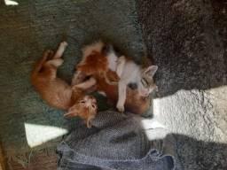 Doação de 3 gatinhos filhotes