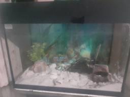 Vendo aquário 55cm completo