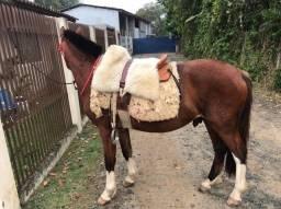 Vendo cavalo crioulo confirmado