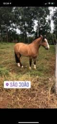 Cavalo Crioulo confirmado Tr Muchacho