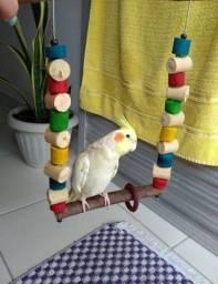 Brinquedos para aves balanço escada e outros