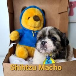 Shih tzu entregamos em seu lar